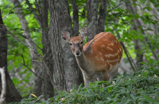 鹿肉アレルギー対策